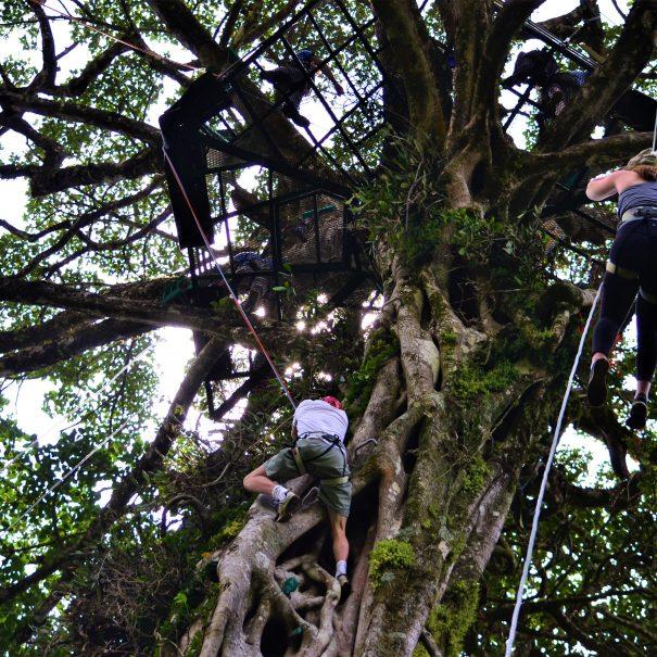 TreeTop Climbing Tour